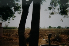 Narmada area