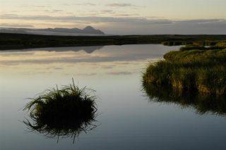 From Þjórsárver Wetlands